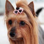 Koiran Rusetti, Koiran hiuskoru, Hiusklipsi Koiralle LightPink SunGlasses, DiivaDog