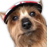 Koiran Lippalakki Summer Red | Häikäisysuoja Pikkukaverille