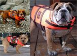 Pelastusliivit koiralle | Turvallista veneilyä koiran kanssa | DiivaDog.fi