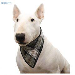 Viilentävä koiran bandana Aqua Coolkeeper Scottish Grey