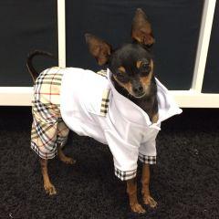 Koiran Vaatteet | Koiran Haalari | MurrBerry PlayBoy JumpSuit, Super Tyylikäs Puku