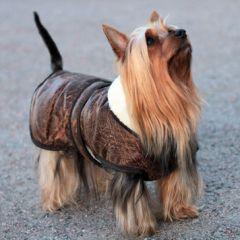 Koiran takki Waggles Pilot Jacket | Lämmin talvitakki pienille ja isoille koirille | DiivaDog.fi